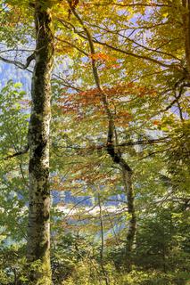 Herbstfarben am See