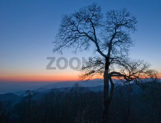 A tree in winter with sunset sky at Great Smoky Mountains National Park.