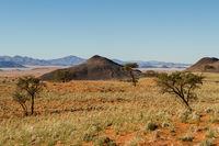 Green desert in Namibia