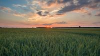 Beautiful sunset sky over ceral field in calm rural landscape. Polish landscape