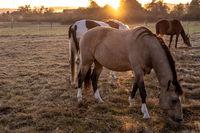 three horses in the sunrise