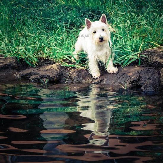 Cute dog at riverside looking to camera