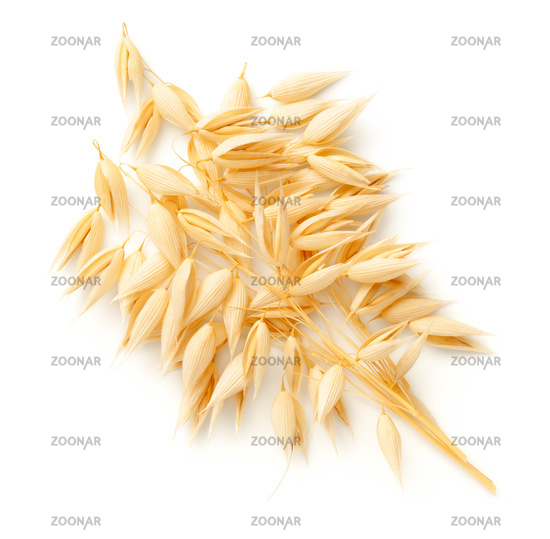 Oat Plants Bunch Isolated On White Background