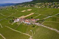 Wine country village Fechy in the vineyards of La Côte, Fechy, Vaud, Switzerland