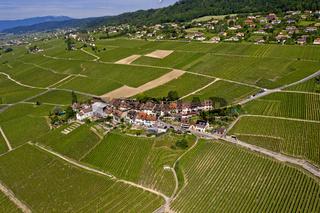 Weinbauerndorf Fechy inmitten der Rebberge der Waadtländer Cote, Fechy, Waadt, Schweiz