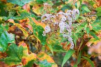 plant willow-herb in autumn, autumn forest landscape