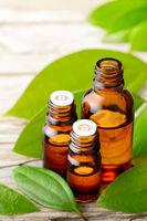cinnamon leaf oil and fresh cinnamon leaves on the wooden board