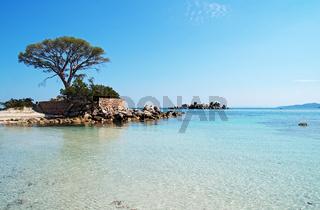 Pinie - Palombaggia - Tamaricciu - Korsika