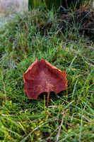Brown leaf meadow
