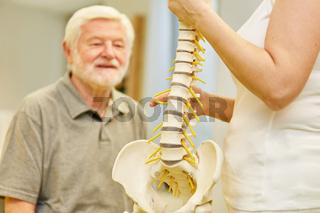 Physiotherapeut erklärt Senior die Wirbelsäule