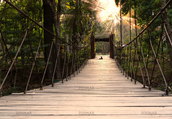 Adventure suspension foot bridge in a tropical rainforest - River crossing activity trail through woodland with summer sunset