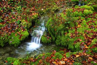 Wasser fließt über Moospolster und bunten Herbstblättern