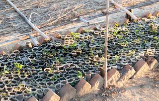 Small tree plantation in Madagascar