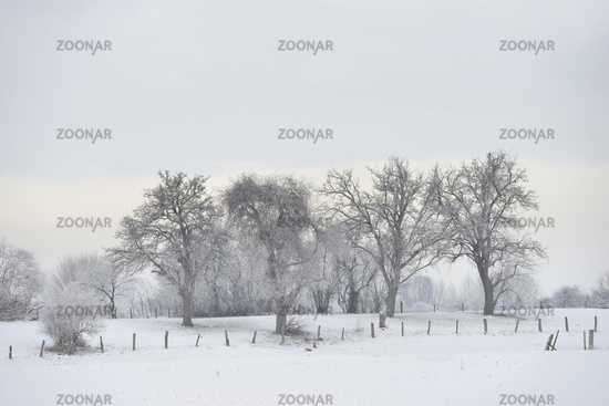 Hoar frosted trees and bushes in rural surrounding on Bislicher Insel