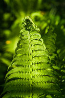 Details of the fern grasses in the spring forest