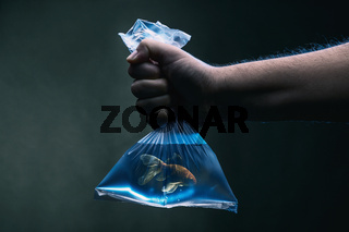 Swimming goldfish in a plastic bag filled with clean blue water under water scene. Environmental pollution, micro plastic and habitat concept.