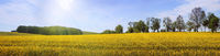 sunny summer landscape panorama