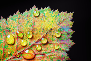 Colorful leaf, water drops