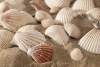 texture, background - close up sea shells on sunny beach