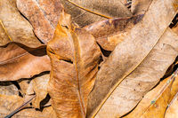 Pile of dry leaves in sunlight