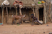 Hamer tribe kid feeding a goat