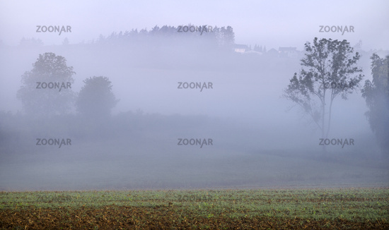 Morning fog in Upper Franconia