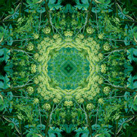 Kaleidoscope from a photo - a green pattern from hogwash umbrellas.