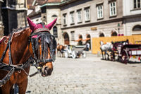 horse on historic europe square