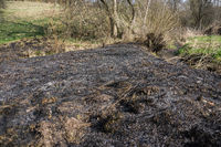 burned meadow area