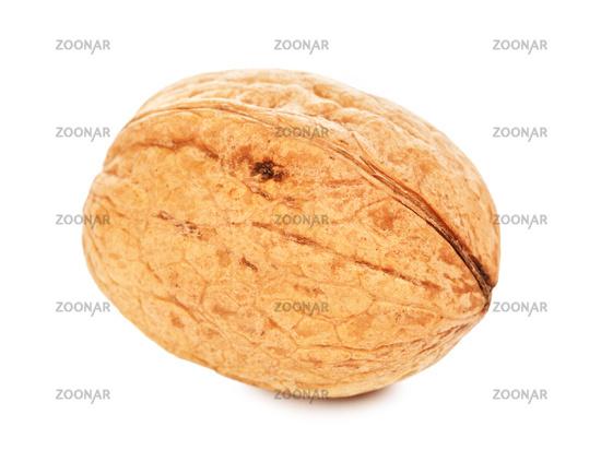 Single Walnut In A Shell