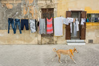 Clothesline and dog in front of typical Southern Italian town houses on the island of Sicily