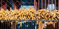 Corn drying on a balcony