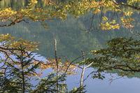 Autumn at the lake, close-up