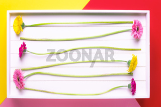 Colorful flowers in wooden tray. Flat lay on multicolored background.