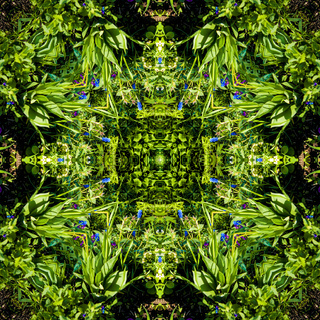 Square, kaleidoscope, a pattern from a photo of small blue flowers on a green background