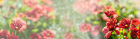 Flower panorama with sunlight and copy space - summer picture - banner