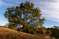 Slate deciduous tree