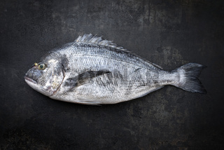 Fresh saltwater gilthead seabream as top view on a black rustic background with copy space