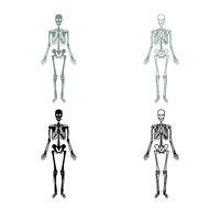 Human skeleton icon outline set grey black color