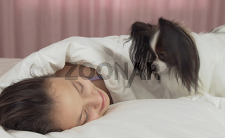 Papillon dog wakes teen girl in the bed