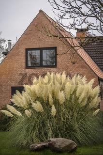 Weisses Pampasgras - Haus in Schleswig-Holstein