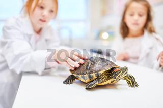 Schüler beobachten eine Schildkröte