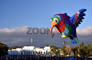 Canberra, Australia - March 10, 2018. Big hummingbird Hot air balloon launching from the grounds of Old Parliament House in Canberra, as part of the Balloon Spectacular Festival.