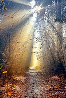 Footpath in the autumn forest in the rays of sunlight.