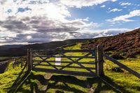Cairngorms Meadows