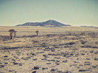 view of the dry land in Namibia