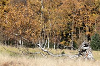 Moorgebiet im Slavkovský les