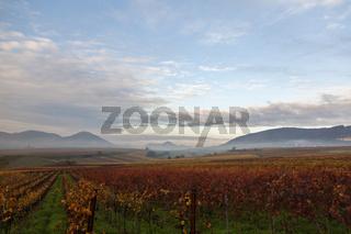 Herbst in der Suedpfalz