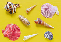 Shells on bright yellow. Beautiful summer background. Flat lay. Texture of the shells.
