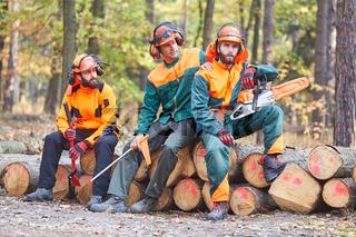 Gruppe Forstwirte bei Waldarbeit im Wald